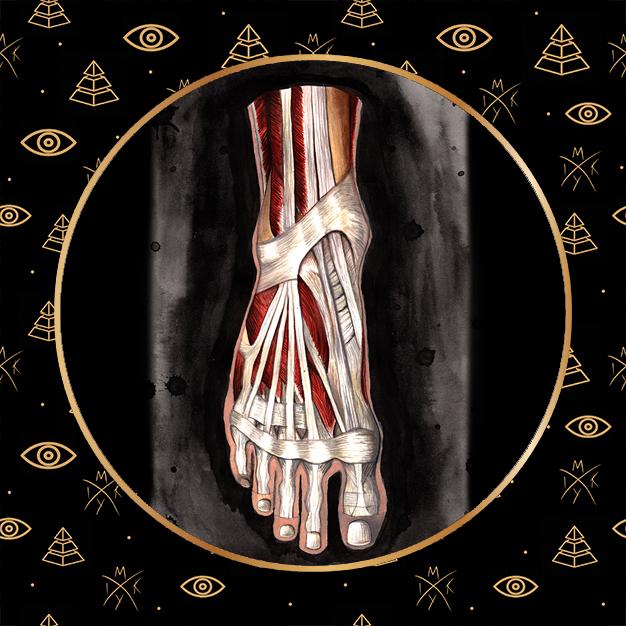 anatomia piede acquerello