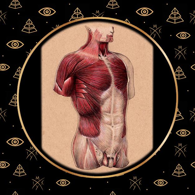 anatomia busto a penna