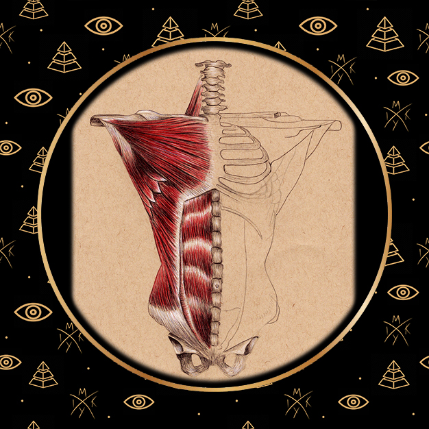Anatomia busto a penna 2 by Miky Ink